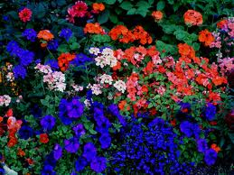 colourful flowers2